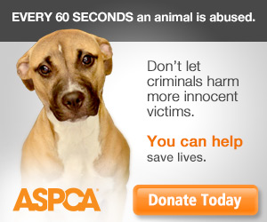 fightcruelty-theme-donatead-020614